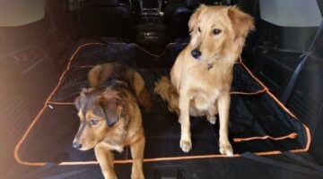 Need A Dog Seat Protector? I Have 3 Dogs – Here's My Review Of The 2-In-1 iBuddy Dog Car Hammock / Back Seat Dog Cover