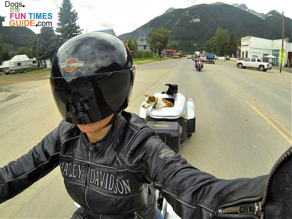 Dog Motorcycle Riding: Safe vs. Unsafe Options (Plus Our Favorite Motorcycle Gear For Dogs!)