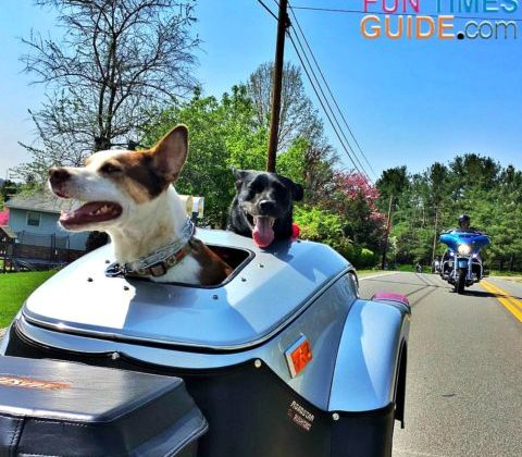 General and Dyna are biker dogs who clearly enjoy motorcycling as much as we do!