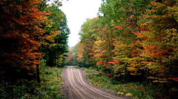 5 Essential Autumn Driving Safety Tips