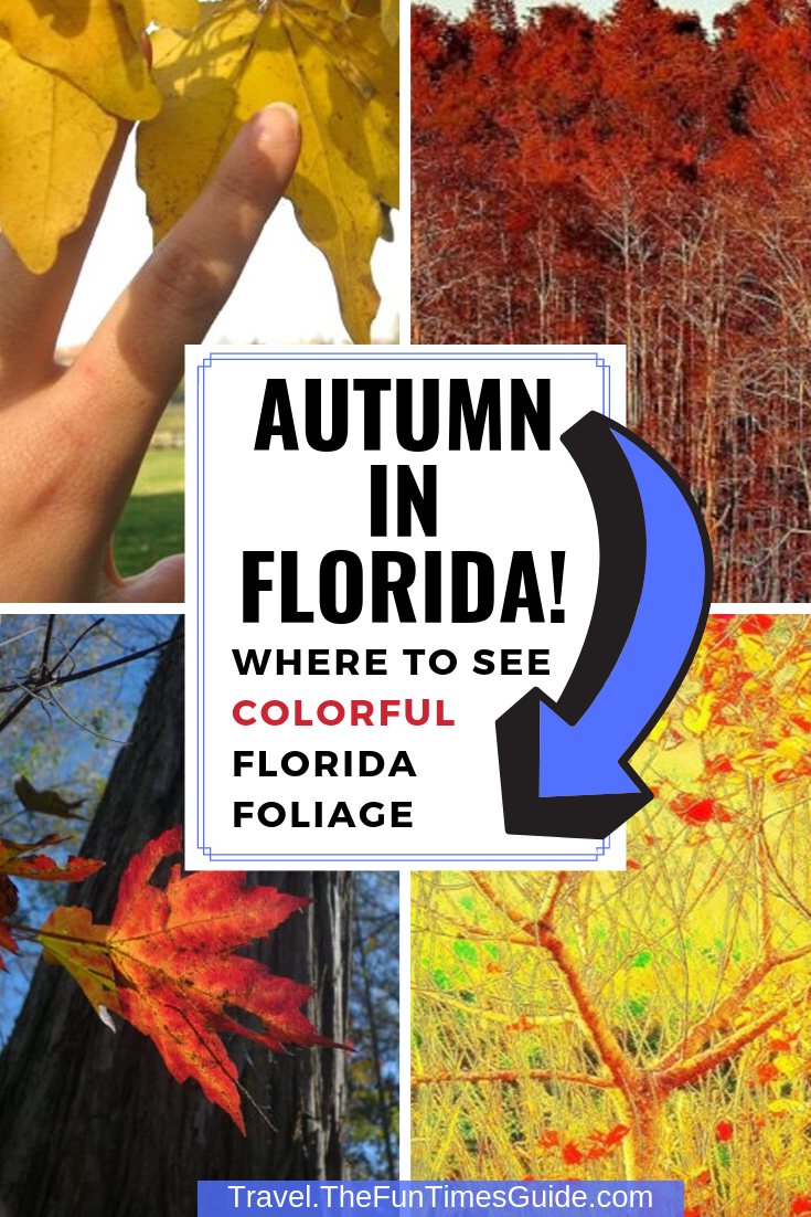 Fall Foliage In Florida? Yes, We Have It! See What Autumn In Florida Looks Like & Where The Florida Foliage Is Most Colorful