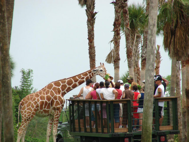 9 Insider Tips For Visiting Busch Gardens Tampa From A Local