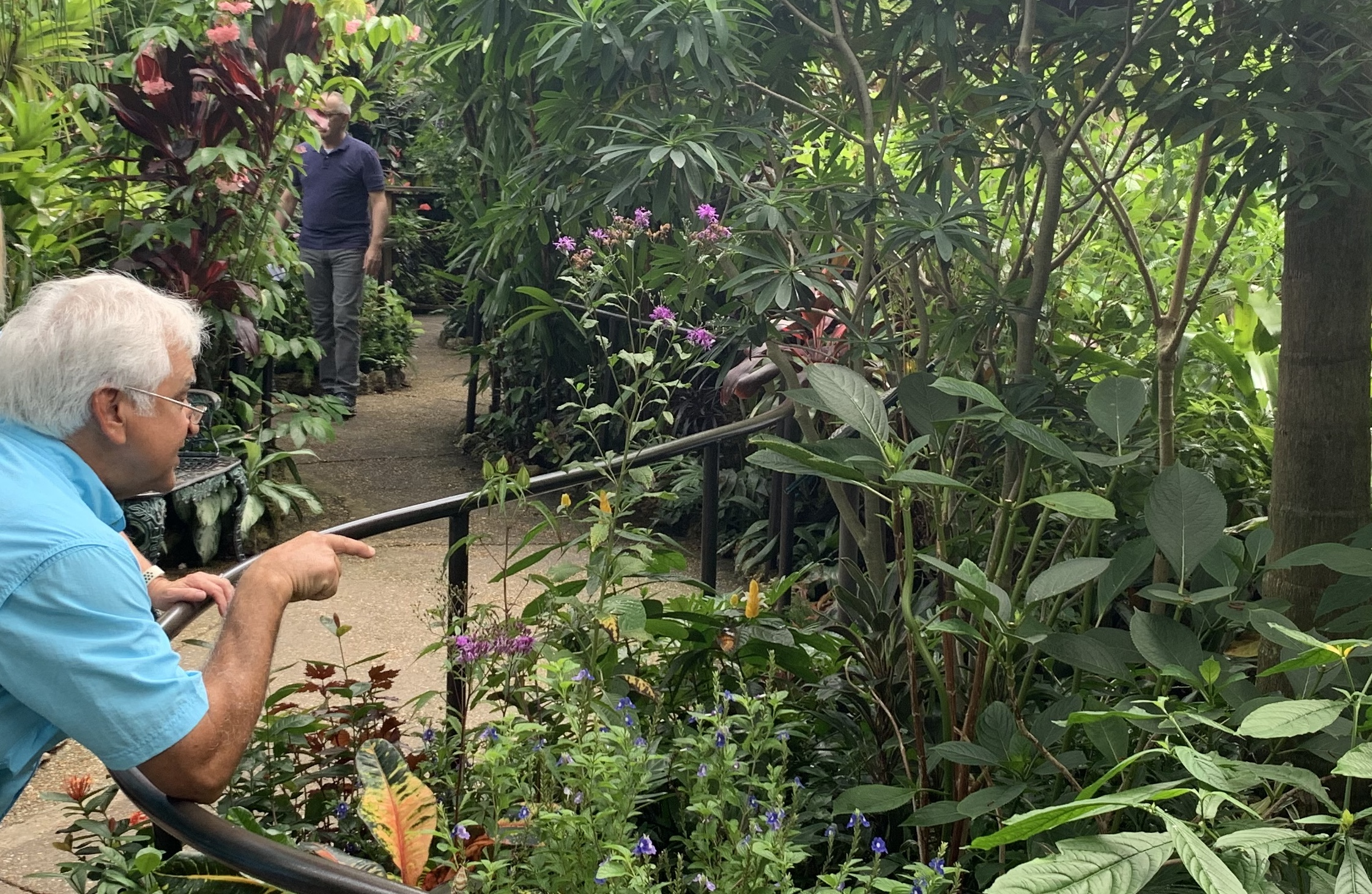 Planning A Visit To The Butterfly Rainforest In Gainesville Fl
