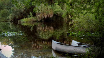 Canoeing in Florida – A Fun (And Cheap) Nature Adventure In The Sunshine State