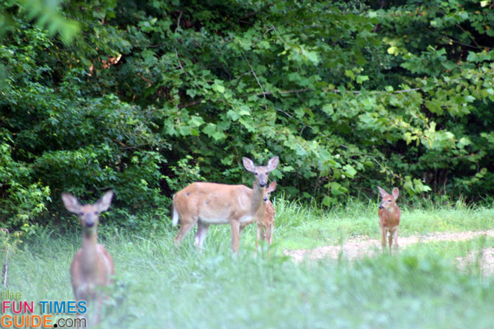 deer on the antioch property - bumpus mills, tn