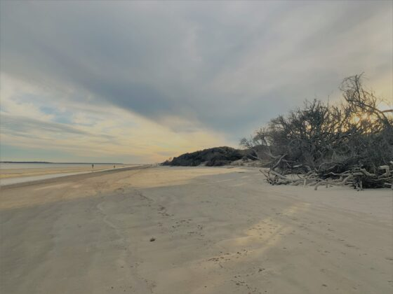 Wondering about the Jekyll Island beach? Driftwood Beach on Jekyll Island is one of the '10 most romantic beaches' in America!