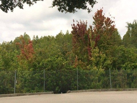 Fall Foliage Florida