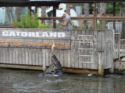 Gatorland is one of the more affordable central florida attractions
