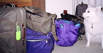 Will Cheap Luggage Suffice?