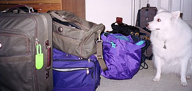loads-of-luggage.jpg