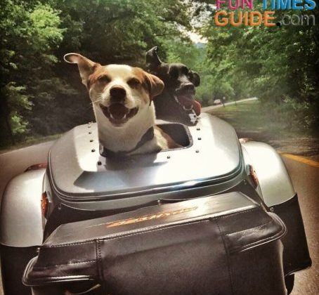 Both of our dogs, general (in front) and Dyna (in back) enjoying a ride in the custom motorcycle dog trailer built for 2 dogs.