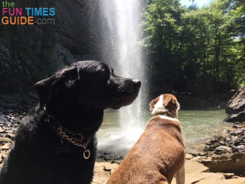 Ozone Falls is dog-friendly - even though the website doesn't recommend bringing dogs since it could be a difficult hike for some.