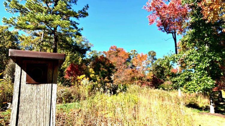 A birdhouse in a meadow at the North Carolina Arboretum.