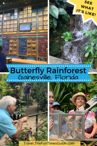 A look inside the Butterfly Rainforest in Gainesville, FL