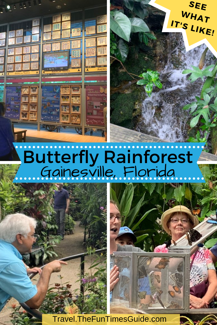 What It\'s Like Visiting The Butterfly Rainforest Museum In Gainesville, Florida + Tips To Get The Most From This Unique Butterfly Conservatory