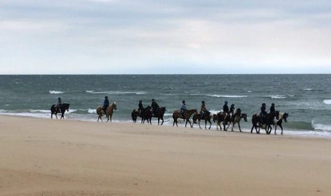 Horseback riding on Virginia Beach