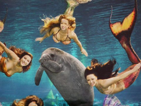 Weeki Wachee Springs - one of the most popular things to do in central florida
